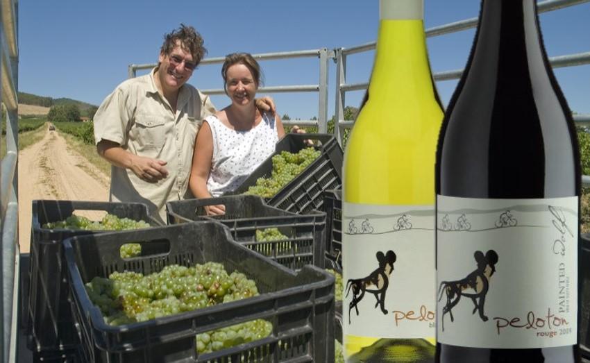 Painted Wolf Wines Ernte der Trauben